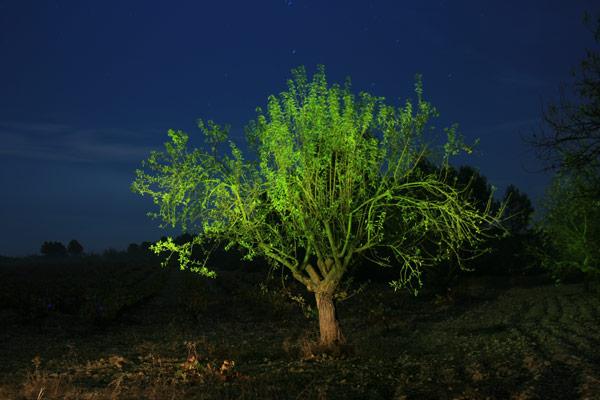 Las noches valencianas 9