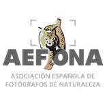 Congreso de AEFONA 2014. Las ponencias.