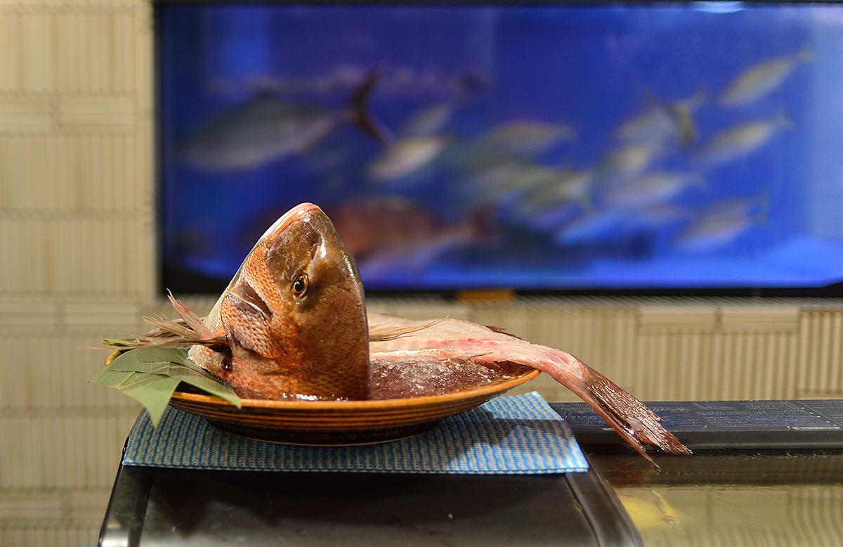 D as 10 11 y 12 kioto la ciudad de los templos y mi for Comida peces estanque barata