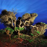 Natural Photo Travel. Agencia de viajes fotográficos por todo el mundo. 9