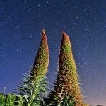 II Concurso fotográfico sobre los Tajinastes en Canarias 1