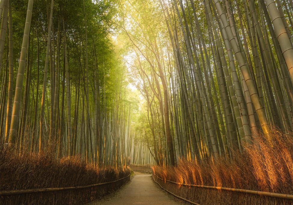 bambooForest-1