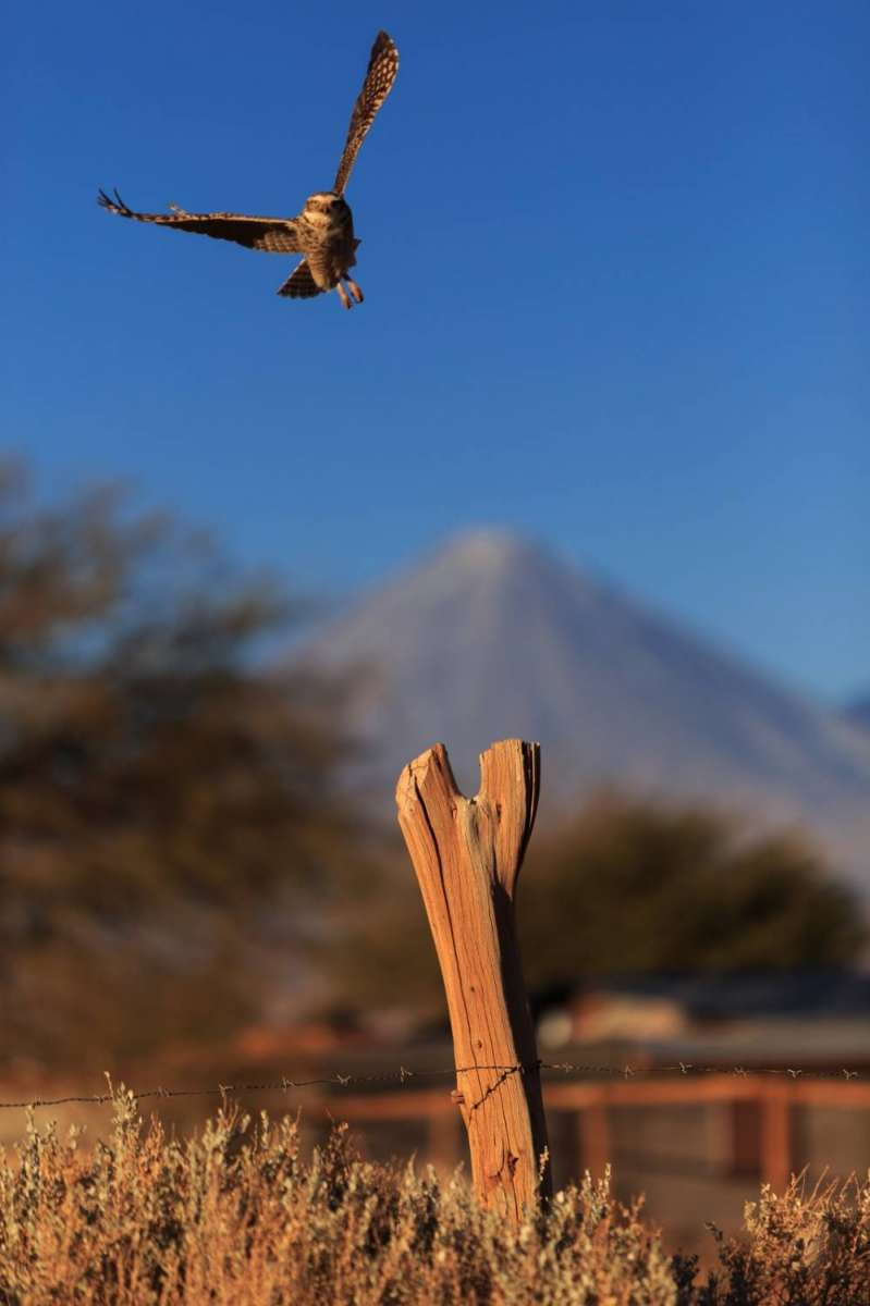 Fotografiando en el desierto de Atacama, Chile. 19